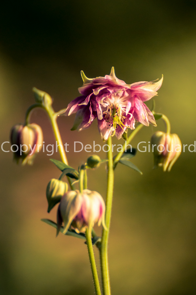 Wildflower buds
