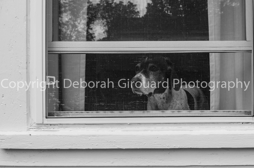 Pointer in the Window