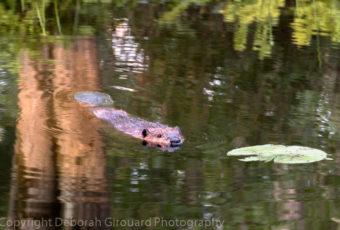 Late Summer Visit to Missisquoi Wildlife Refuge