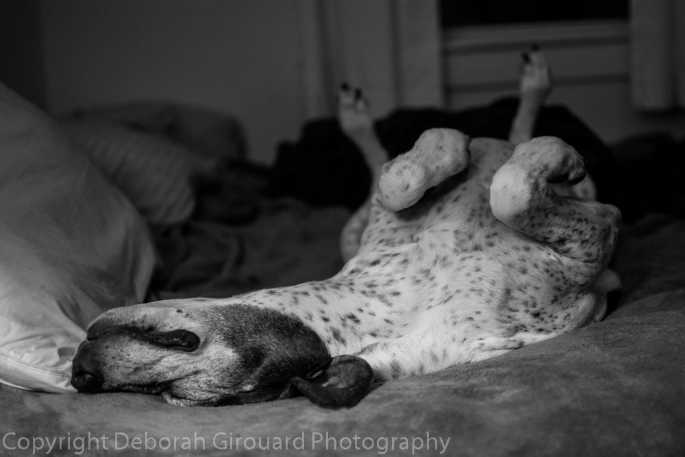 Gitte Sleeps.....alot